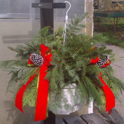 Featured Plants & Flowers - Eckerts Greenhouse - Holiday_wkndr