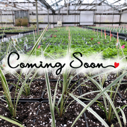 Featured Plants & Flowers - Eckerts Greenhouse - ComingSoon