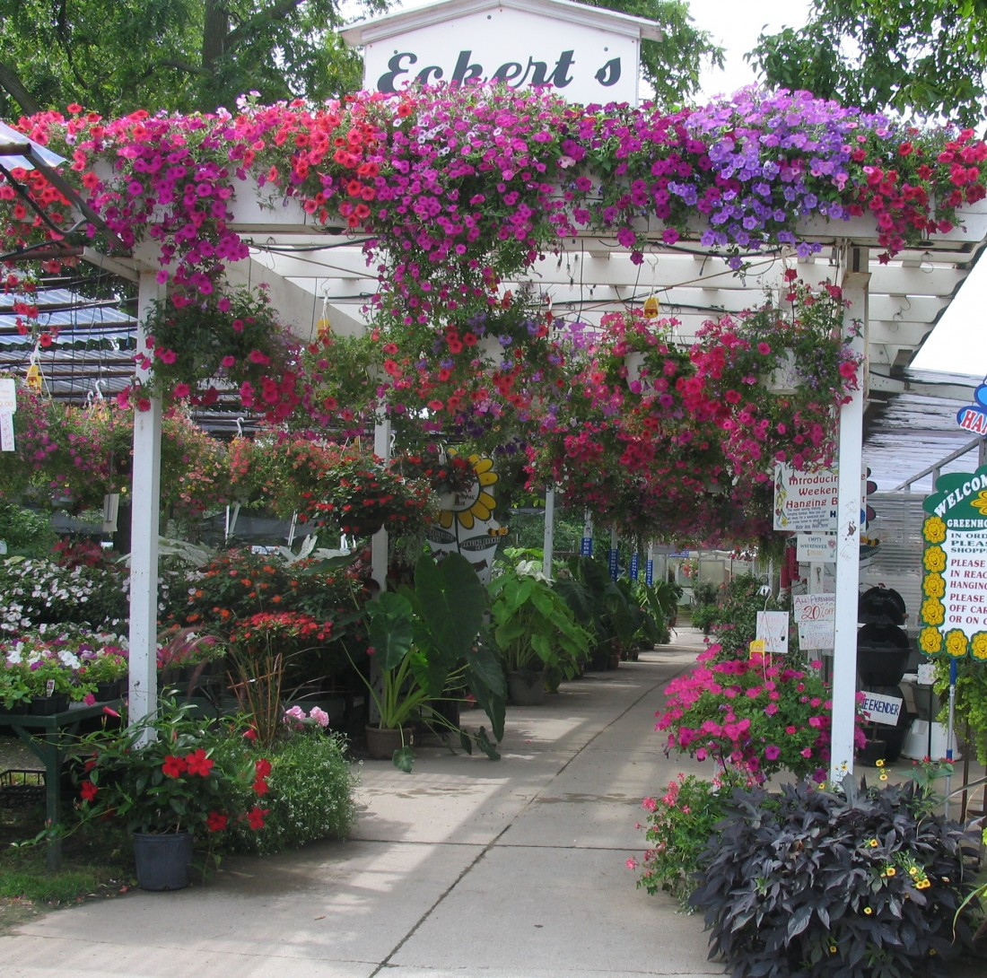 Plant Nursery Clawson Mi Flower Baskets Garden Supply Eckert S Greenhouse Pathway