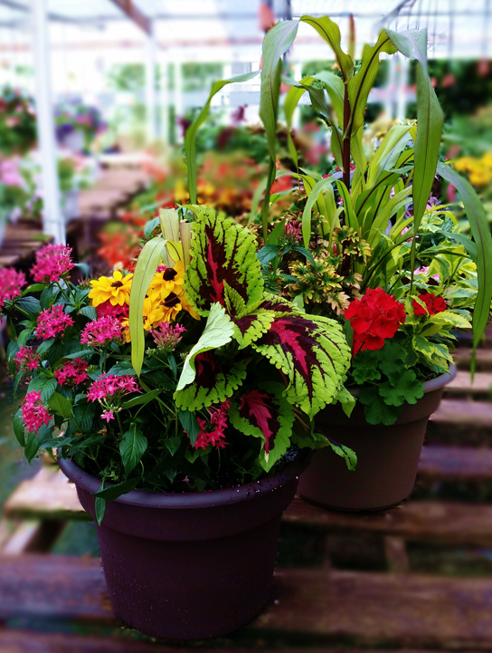 Greenhouse Clawson MI - Flower Baskets, Garden Supply | Eckert's Greenhouse - comboplanters