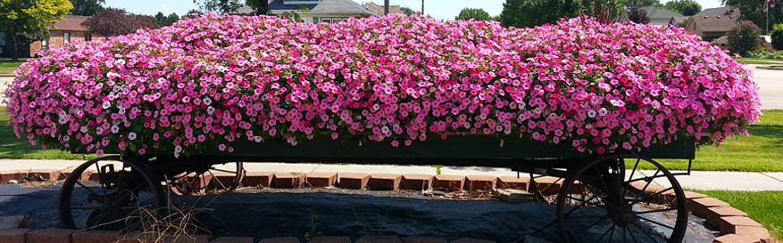Mount Clemens Plant Nursery - Flower Baskets, Garden Supply | Eckert's Greenhouse - flowers