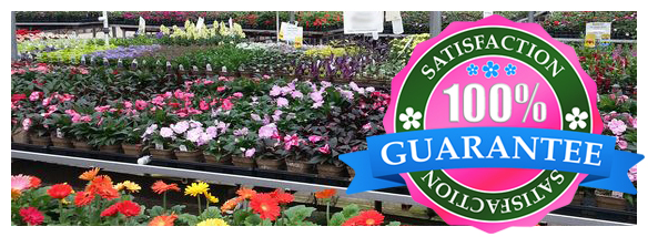Exotic Plants Troy MI - Locally Grown Plants - Eckert's Greenhouse - insideseal