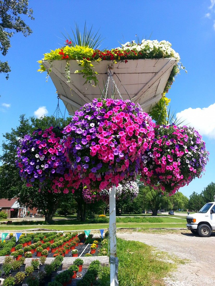 Garden Center Clinton Township MI - Flower Baskets, Garden Supply | Eckert's Greenhouse - parking_lot_post