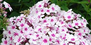 Perennial Plants Amp Garden Flowers Sterling Heights Mi