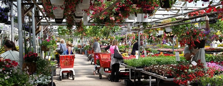 Spring - Summer - Eckerts Greenhouse - 3A