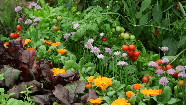 Top 5 Benefits of Companion Planting - Plant Nursery: Michigan Gardening Tips | Eckert's Greenhouse - companionplants2