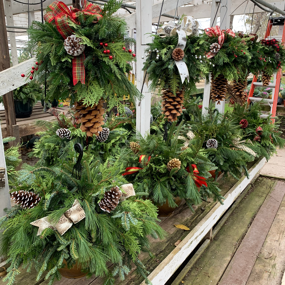 Featured Plants & Flowers - Eckerts Greenhouse - hb%2Bchandeliers19
