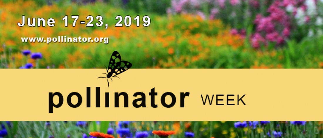 Pollinator Week 2019 - Events - Eckerts Greenhouse - pwcoverphoto2019final