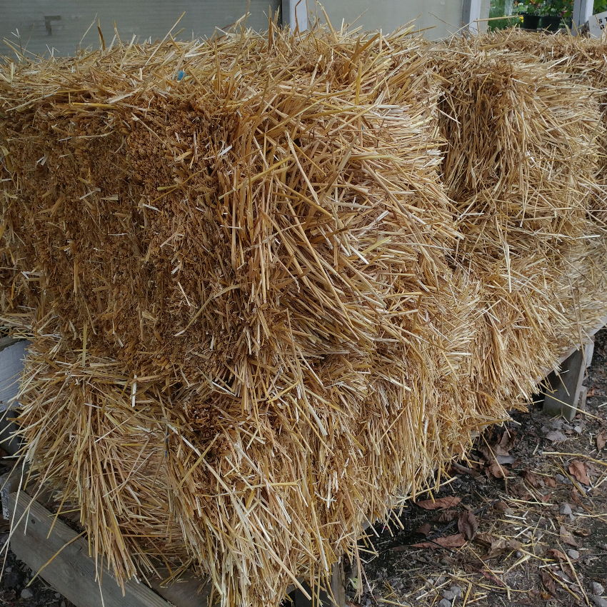Fall - Eckerts Greenhouse - strawbales