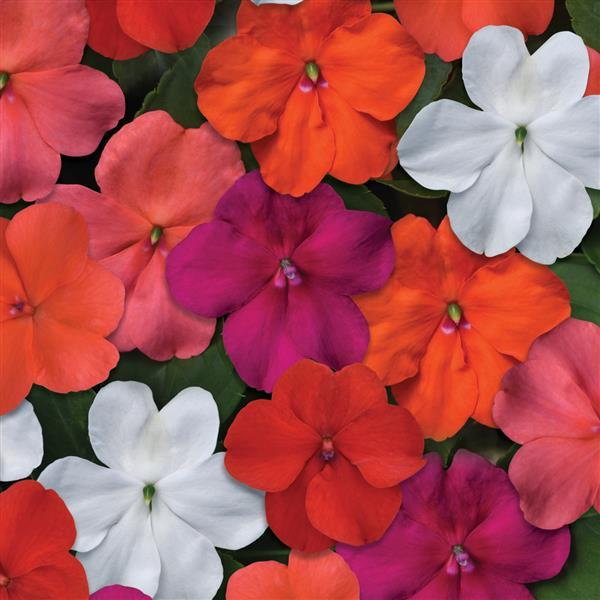 Featured Plants & Flowers - Eckerts Greenhouse - BeaconIMP_SelectMix