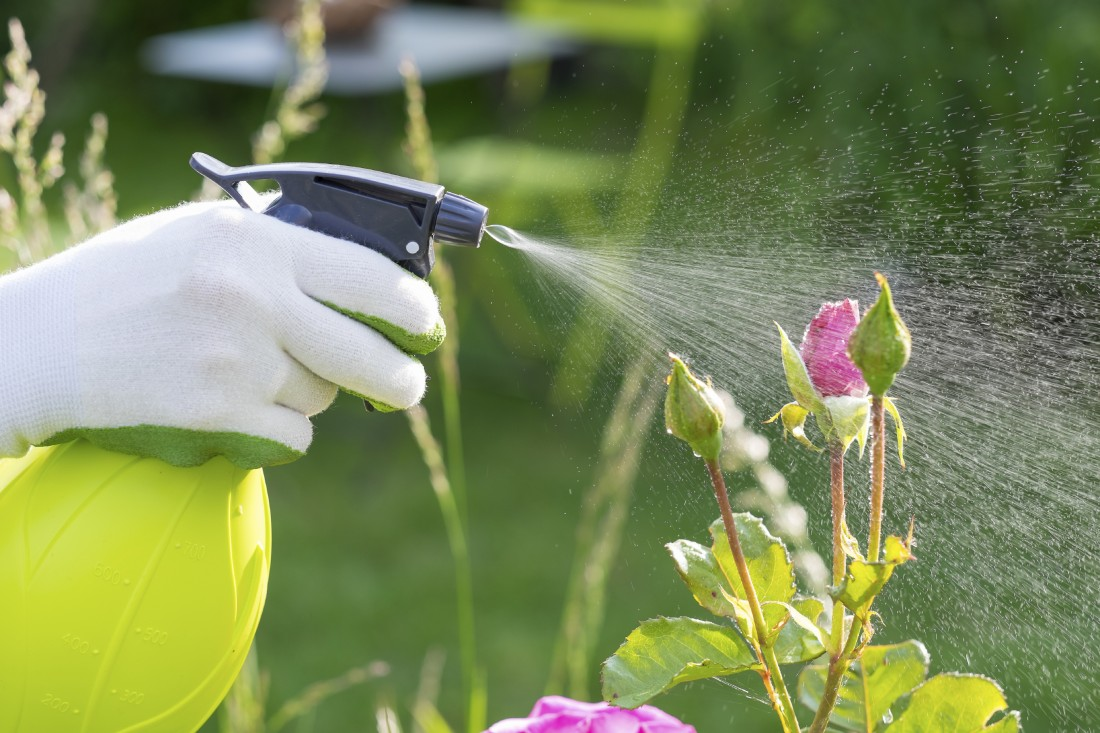 Garden Supplies: Fertilizer, Soil Sterling Heights | Eckert's Greenhouse - iStock_000044726984_Large